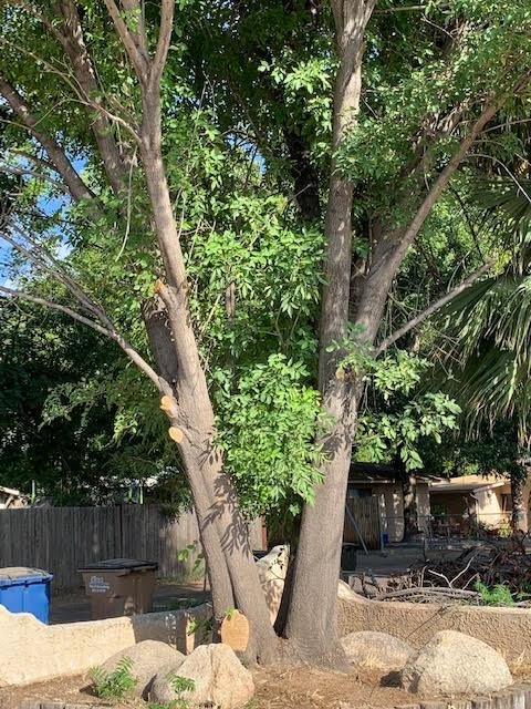 ash_tree.jpg.e3047e036c156645b939a6ff176d343b.jpg