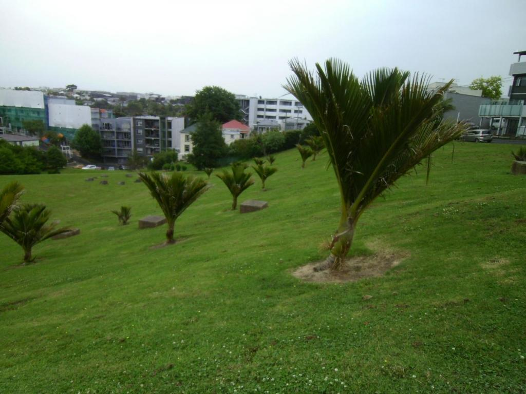 palms 2429.JPG