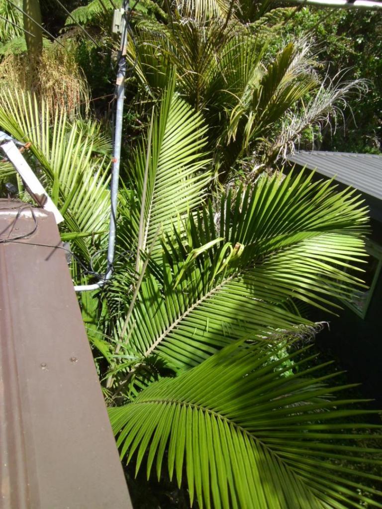 palms 2045.JPG