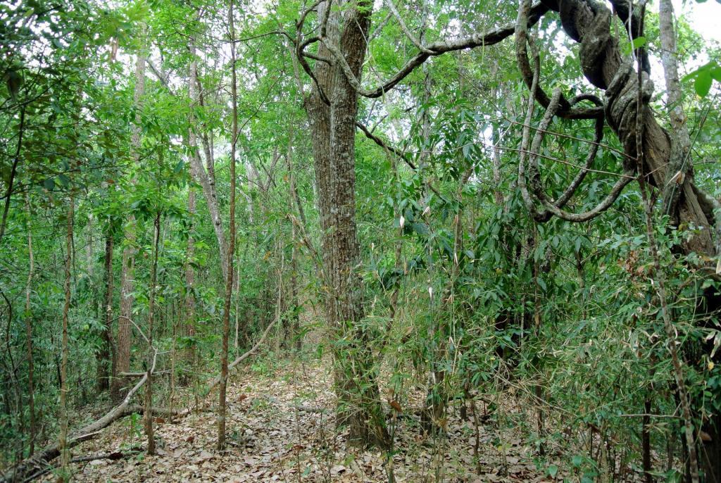 Subtropical_semi-evergreen_seasonal_forest_in_Northern_Thailand.thumb.jpg.4b0d59bcca10cafca12ba53efa29fbf6.jpg.4da8afe3336034c7086c555a5242d1d1.jpg