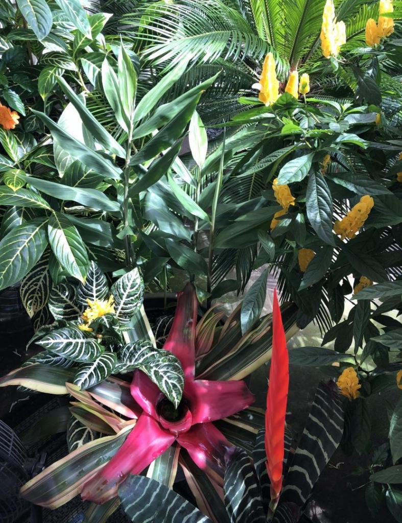 TropicalPlanter13SEP2020.thumb.jpg.f1f26ba30cb5e0cb7adcde1504f591cd.jpg