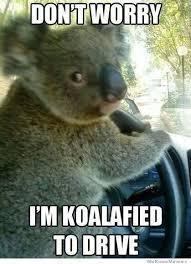 koalafied.jpg.21e63d7a9f7d8988caf16706d5364eb1.jpg