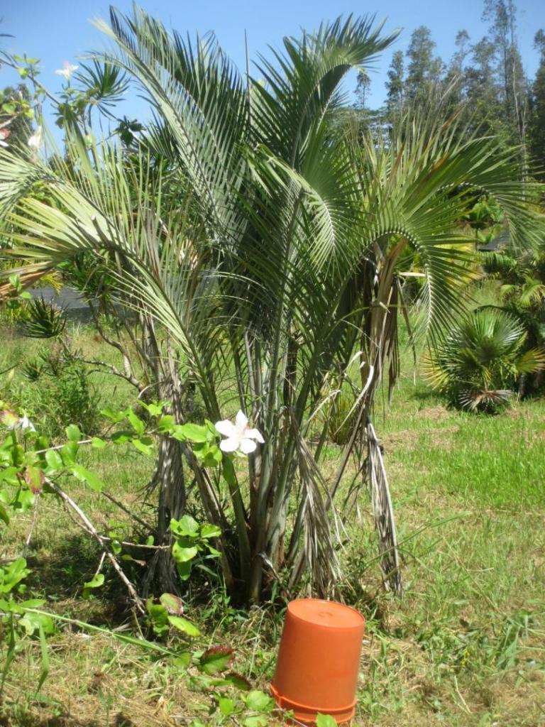 xerophylla_MLM_100620.thumb.JPG.bf77926ce122637eaac9f7600341361d.JPG