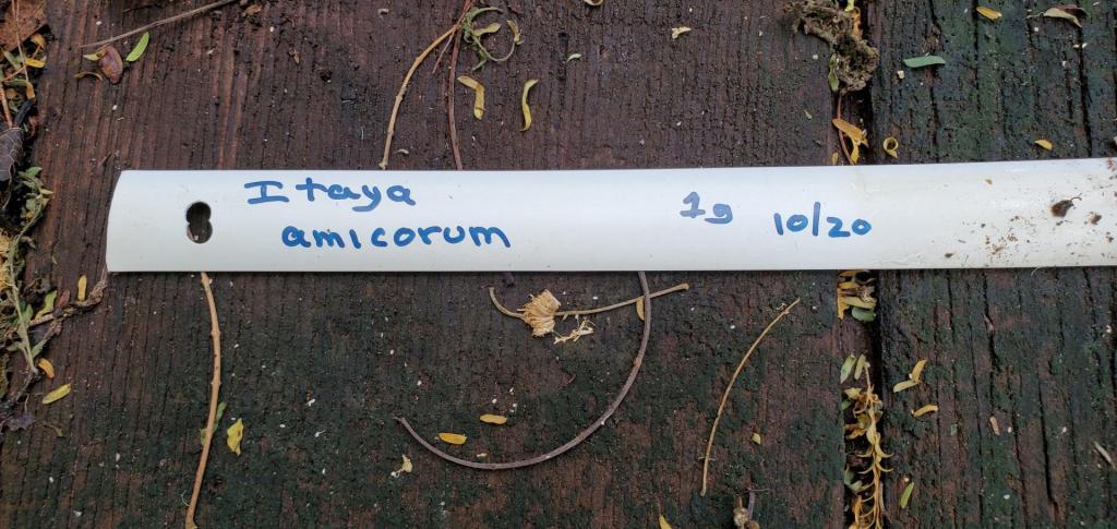 Itaya amicorum-20201118_131939.jpg