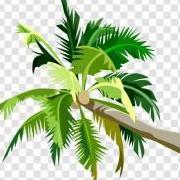 Palmfarmer