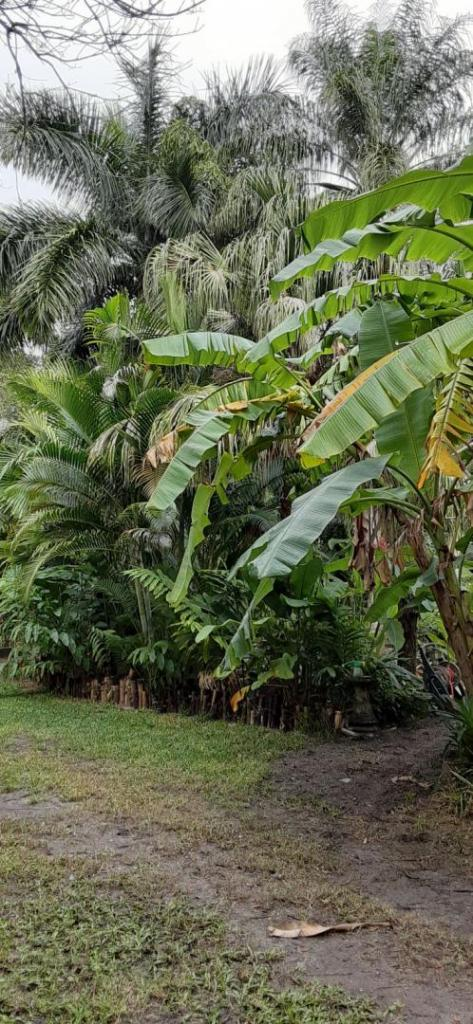 20201205_100551_BananaPath_01.jpg