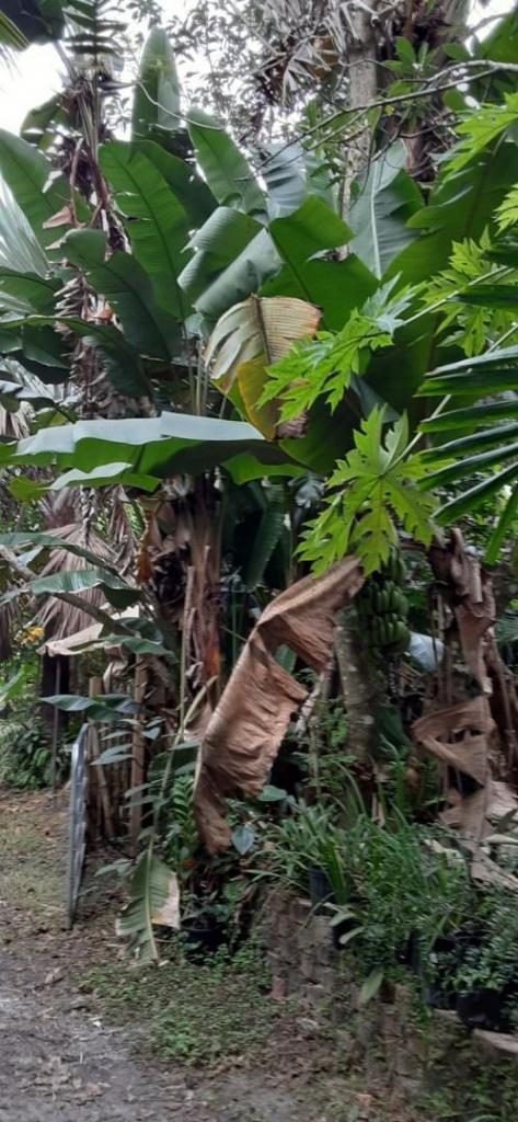 20201205_100623_BananaPath_02.jpg