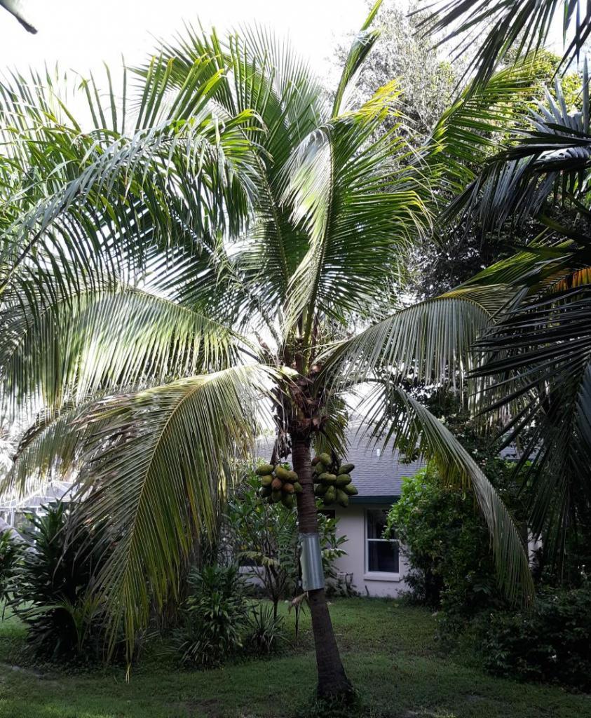 Coconut s.e. view 9-16-2020 (2).jpg