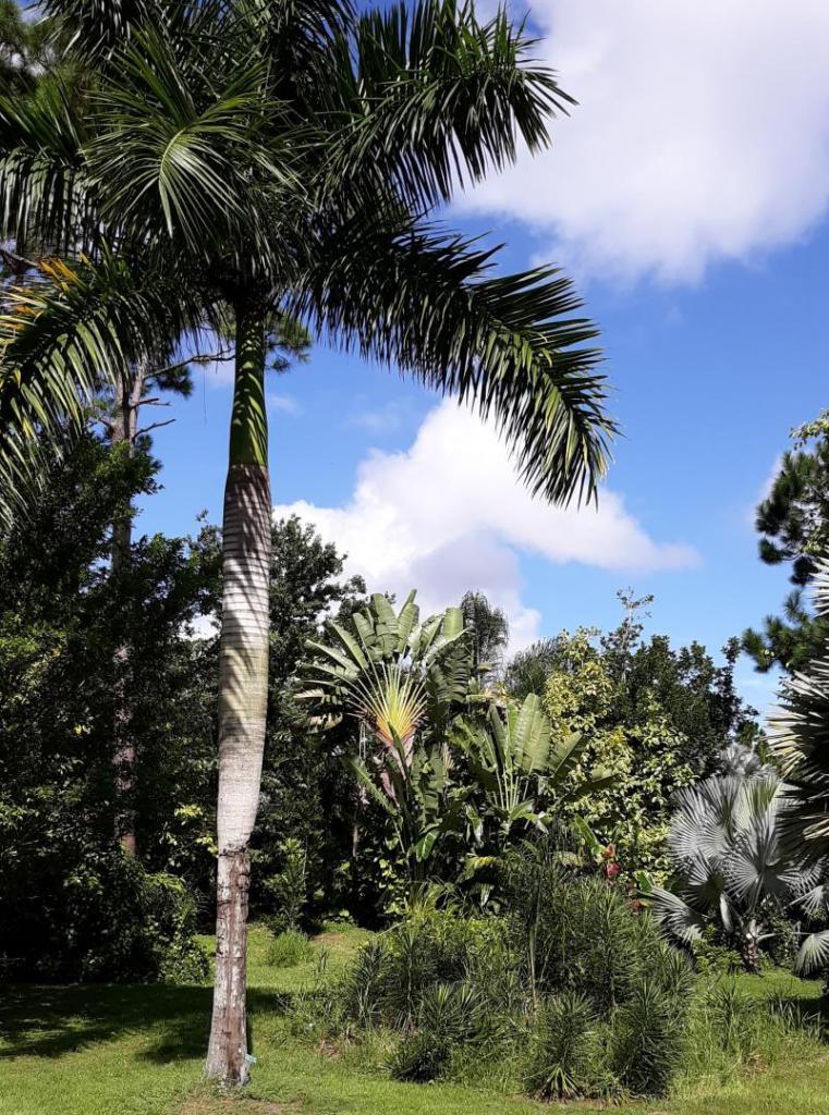 Royal palm alt 8-23-19.jpg