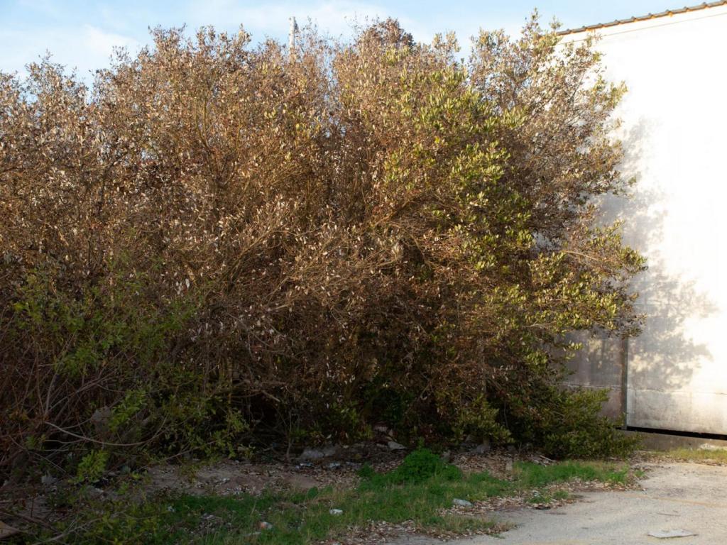 Mangroves SPI.jpg