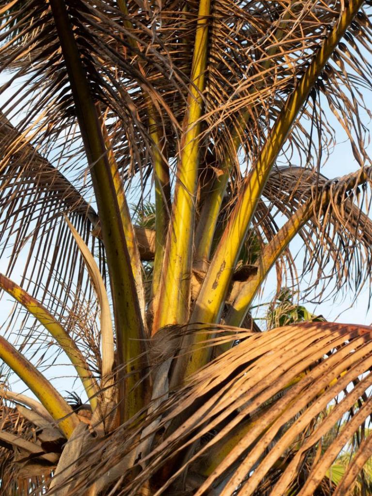 Cocos close.jpg