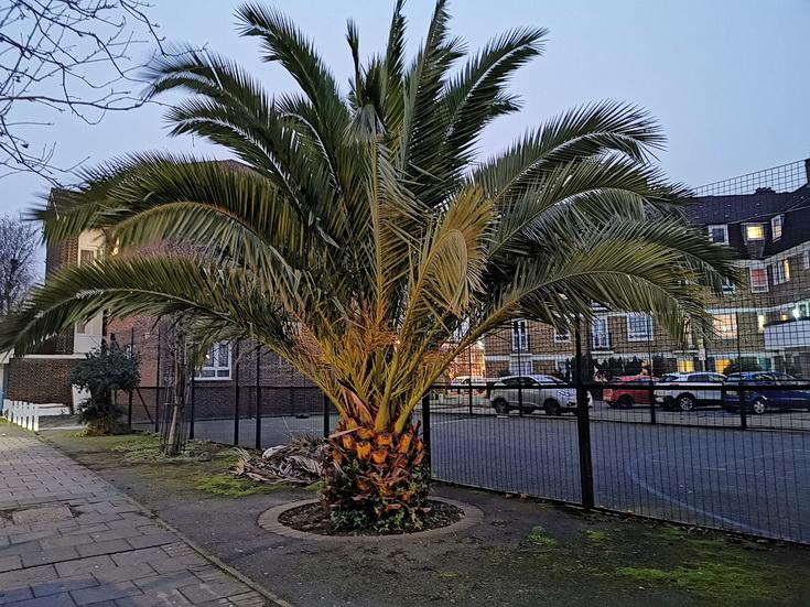 brixton-street-pics-jan-2021-04.jpg.b0589480aa3655d694dcceefa30528c3.jpg