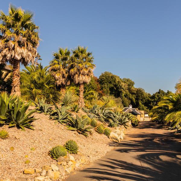 195834-ventnor-botanical-garden.jpg.9bd1cba84ec5b99a4c566153a6b52342.jpg