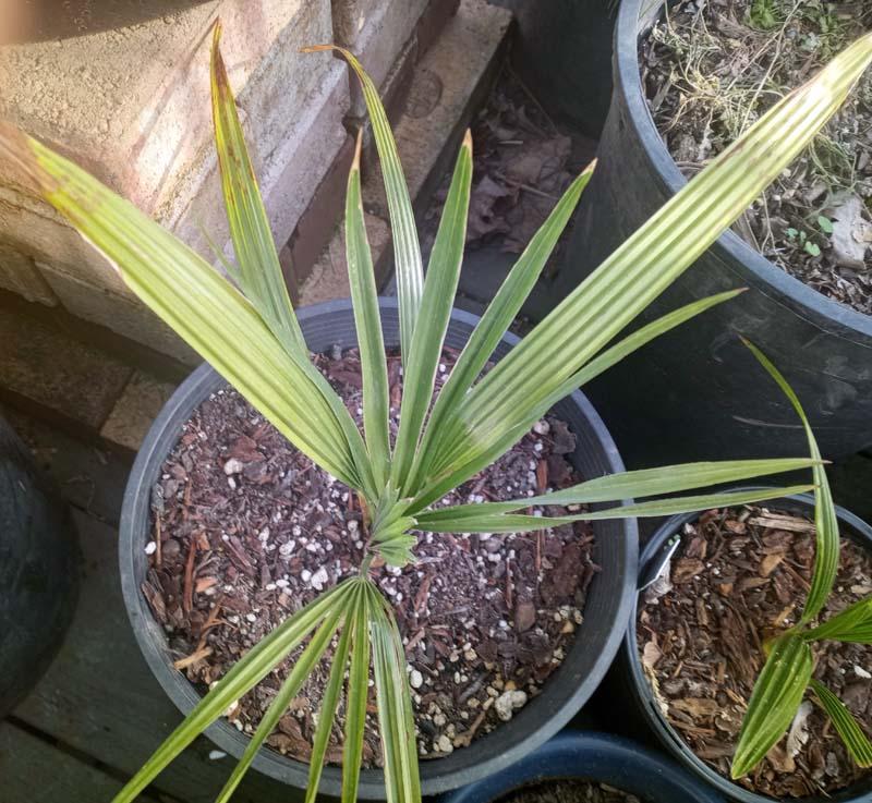 mystery palm.jpg