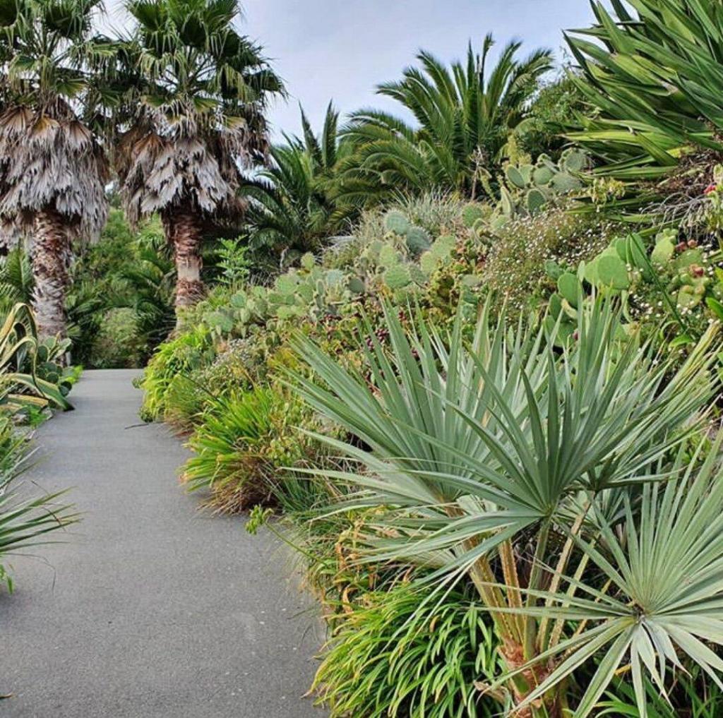 mediterranean-garden.thumb.jpg.b1fa68264501d21f12616212869e8610.jpg