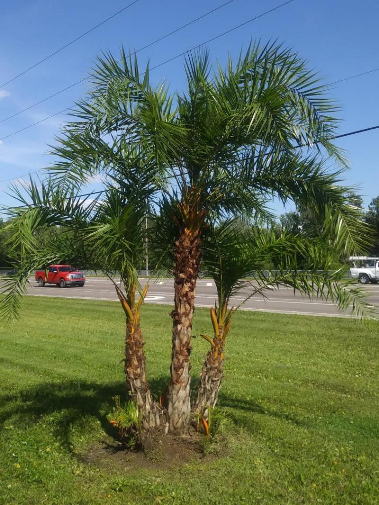 Tree 2 update.jpg