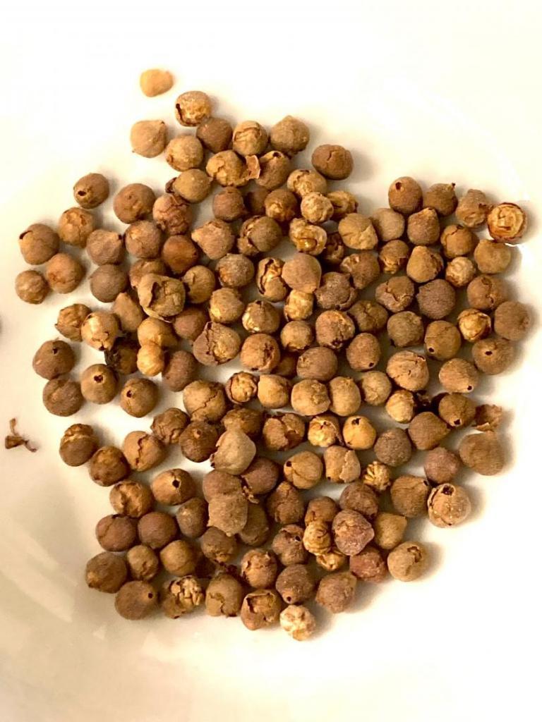 Coccothrinax crinita seeds 09-14-21.JPG