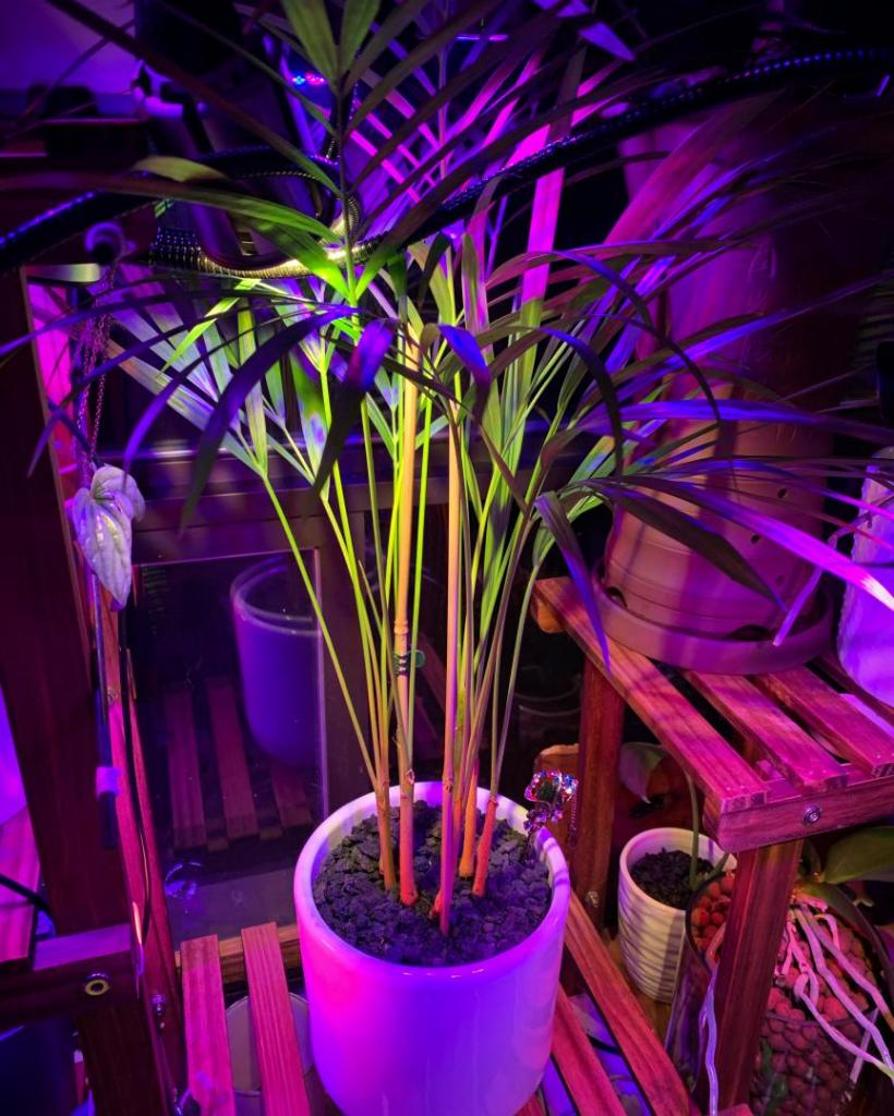 Rainbow Palm.JPG