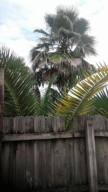 palms1.jpg.1fa28afa77ae1404847202736f58f165.jpg