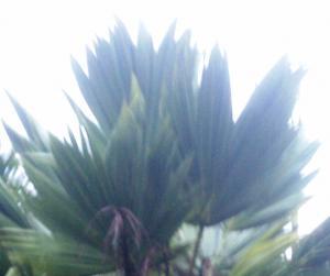 post-50-058816400 1318269332_thumb.jpg