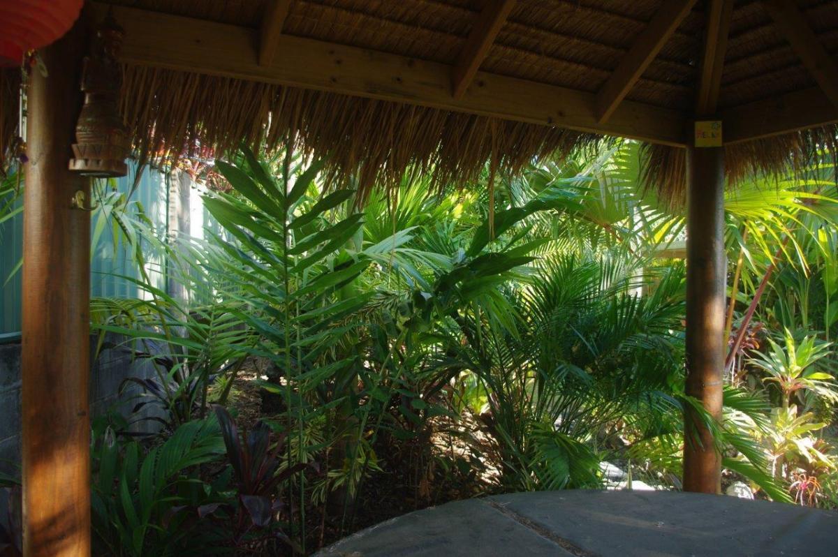 incredible tropical garden brisbane | Tropical garden in Brisbane - DISCUSSING PALM TREES ...
