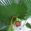 Palmgrover