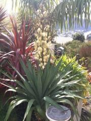Yukka flower And Cocus