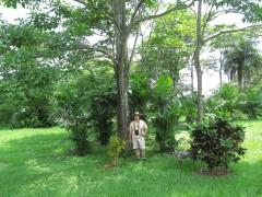 Al & Ptychosperma macarthurii
