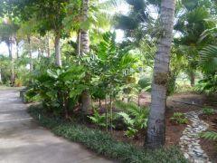 Understory palms