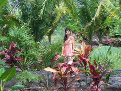 lava garden
