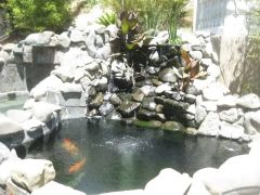 Another shot Of The Koi pond