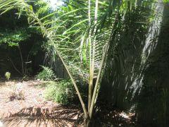Bergstrom Garden