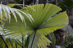 Lundkvist Palm Garden: March 2014 Visit