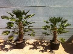 Palms Catalonia